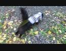 【脱走だーッ!30】黒猫キキくん