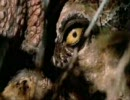 【ニコニコ動画】タイムスリップ!恐竜時代 アロサウルス編その1を解析してみた