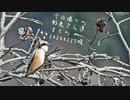 今日撮りの野鳥さん達まとめ2月27日晴れ初モズ♂