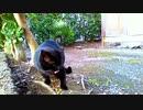 食堂の野良猫 2020-02-28
