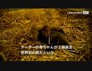 世界初、体外受精でチーターの赤ちゃん誕生 米動物園で(27日)