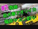 【#7 イカ釣り動画】奇跡が起きた!巨大春アオリイカがヤエン釣りで釣れちゃいました!福井県敦賀!