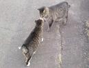猫たちの集会所は堤防の上にあった