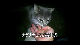 「マタタビ」な手