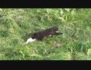 獲物はどこにいる?な黒猫さん。。