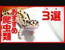 【経験談】初心者にお勧めの爬虫類を紹介します
