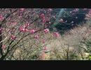 第二世界の旅日記 066【スイフトで走る仁淀川町】