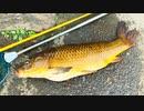 【釣り・рыбалка в Японии(Токио・Парк Мицуги)】見次公園で鯉釣り@東京の板橋区、上板橋~志村坂上の間でオルルドのタモ網テスト【VLOG・iPhone XS】