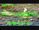 野鳥シリーズ 尾羽フリフリ川辺を動き回る キセキレイ