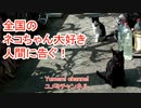 全国のネコちゃん大好き人間に告ぐ!【ユメミチャンネル】