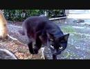 食堂の野良猫2020-03-24