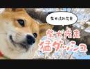 桜ガン無視!お花見で猛烈ダッシュする柴犬