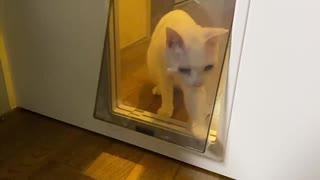 不器用なネコチャンズ、猫リフォームの猫用扉付ドアに挑む