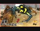 危険な毒を持つ「ヤドクガエル」を大量のアリで囲んだら、とんでもない結果になった。