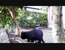 食堂の野良猫 2020-03-28