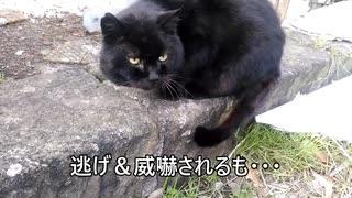 「ツンデレ」な猫