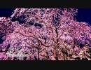 【BGM・和風】桜花 (Original)