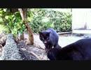食堂の野良猫 2020-03-29