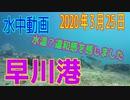 水中動画(2020年3月25日)in 早川港