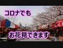 コロナウイルスに負けるな!!福岡県飯塚市の桜の名所!!勝盛公園のお花見!!