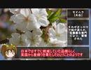 【ゆるふわ植物日記#3】いろいろなサクラ【植物解説】
