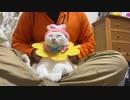 オッドアイの白い珍獣(猫)、先住猫の謎ダンスで真顔になる