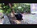 食堂の野良猫  2020-04-03