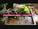 【リセット】滝のあるトロ船ビオトープ2020.4【立ち上げ】