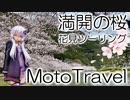 【実写合成MMD】満開の桜の花見ツーリング  - 結月ゆかり車載