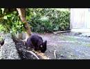 食堂の野良猫 2020-04-04