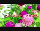 【アッチのオリジナル曲 No.04】センニチコウ  - とわの愛 -