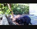 食堂の野良猫 新人登場 2020-04-05