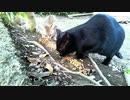 食堂の野良猫 2020-04-07