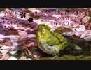 4月7日今日撮り野鳥動画まとめ 花筏水浴びヒヨドリメジロ、カワセミ巣にイン