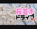 【気分転換】桜並木ドライブ take2