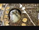 4月9日今日撮り野鳥動画まとめ 花筏と野鳥達、コゲラ巣穴、桜ほっぺカルガモさん
