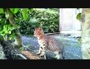 食堂の野良猫 2020-04-10