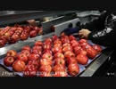 アイマスアイドルの楽曲を聞きながらリンゴを見る動画