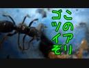 【アリの飼育記#168】寄生種のゴツイ蟻を捕まえました【テラニシクサアリ】 Queen ant parasitizing other ants
