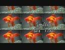 【ボカロオリジナル】金魚~GOLD FISHES~【v4flower】
