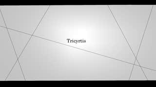 【初音ミク】Tricyrtis - トリキルティス 【オリジナル】
