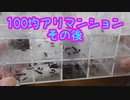 【アリの飼育記#175】100均アリマンションどうなった? After an ant nest made at a 100 yen shop