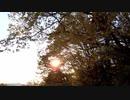 木の間から顔を出す太陽と鳥の鳴き声2【作業用BGM】