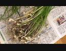 【クイズ】古事記・万葉集にも記述されている希少な天然野草の名は?