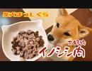 【魅惑のディナータイム】グルメ通の柴犬は愛媛県産イノシシ肉が大好物