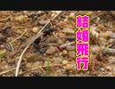 【アリの飼育記2冊目#7】アリが空へ羽ばたく日【クロナガアリ結婚飛行】Flying ants day.