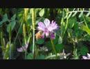 【オリジナルクラシカ初演祭8】木管五重奏のための小品【yhr様】