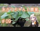 あかりちゃんと農業#09『きゅうりを植えます』
