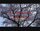君ヲ想イ桜ニ泣ク