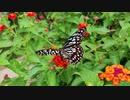 蝶と花 綾